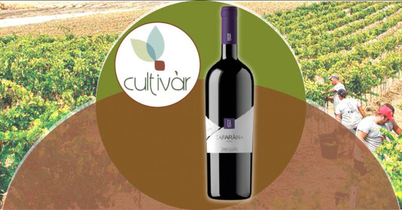 CULTIVAR Offerta vino Syrah Terre Siciliane - occasione vendita vino biologico Syrah rosso